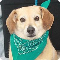 Adopt A Pet :: Lance-PENDING - Garfield Heights, OH