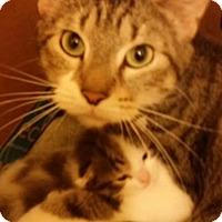 Adopt A Pet :: Ginna - Chicago, IL