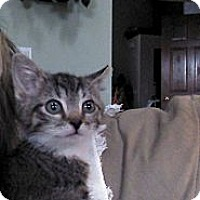Adopt A Pet :: Darby - Sterling Hgts, MI