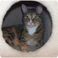Adopt A Pet :: Parmesan - El Cajon, CA