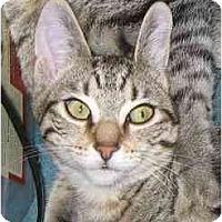 Adopt A Pet :: Beezus (video) - Portland, OR