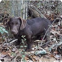 Adopt A Pet :: Joy - Adamsville, TN