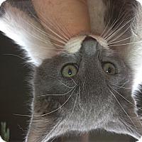 Adopt A Pet :: Liam - Santa Monica, CA