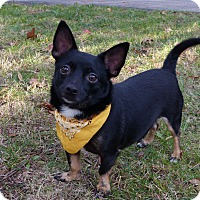 Adopt A Pet :: Fleetwood - Mocksville, NC