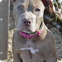 Adopt A Pet :: Anaya - Meridian, ID