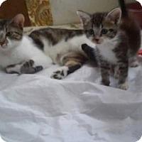 Adopt A Pet :: Daphiny - Ocala, FL