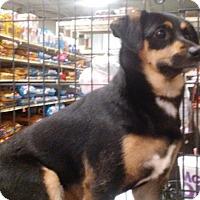 Adopt A Pet :: Katie - Columbus, OH