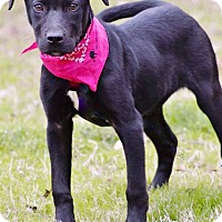 Adopt A Pet :: April in CT - Manchester, CT