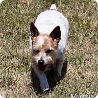 Adopt A Pet :: MUZZIE - Terra Ceia, FL