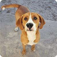 Adopt A Pet :: Tucker - Umatilla, FL