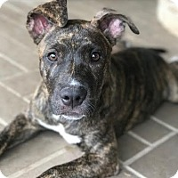 Adopt A Pet :: Fall - Houston, TX