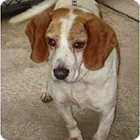Adopt A Pet :: Sammy Garret - Waldorf, MD