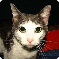 Adopt A Pet :: Avery - Norwich, NY