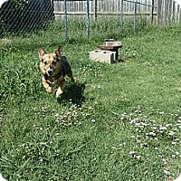 Adopt A Pet :: Brandy - Inola, OK
