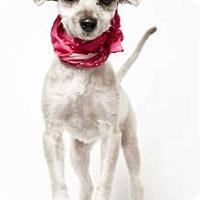 Adopt A Pet :: Mona - New York, NY