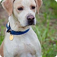 Adopt A Pet :: Milton - Lewisville, IN