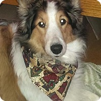 Adopt A Pet :: Daisy - Abingdon, MD