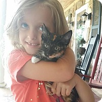 Adopt A Pet :: Leah calico - McDonough, GA