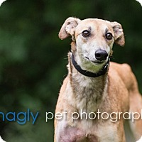Adopt A Pet :: Victoria - Dallas, TX