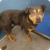 Adopt A Pet :: Rocki (HW Neg)** - Henderson, NC
