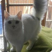 Adopt A Pet :: Elsa Winter - Los Angeles, CA