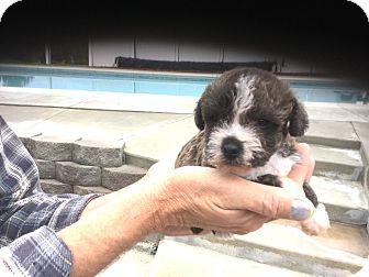 Adopt A Pet :: Hugger Shasta Update Photos  - Corona, CA