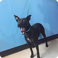Adopt A Pet :: Twinkle~ meet me! - Glastonbury, CT