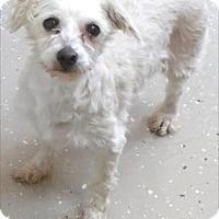 Adopt A Pet :: Merida - Waupaca, WI