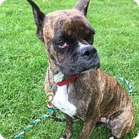 Adopt A Pet :: Mabel - Troy, MI
