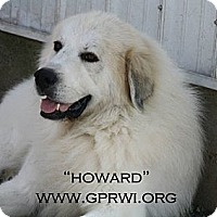 Adopt A Pet :: Howard - Cambridge, IL
