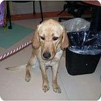 Adopt A Pet :: COOKIE - San Diego, CA