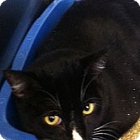 Adopt A Pet :: Inky - Secaucus, NJ