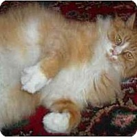 Adopt A Pet :: Boris - Portland, OR