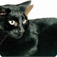 Adopt A Pet :: Emereld - Medway, MA