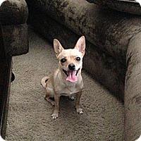 Adopt A Pet :: DD - Phoenix, AZ