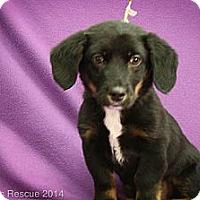 Adopt A Pet :: Kai - Broomfield, CO