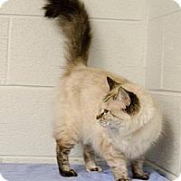 Adopt A Pet :: Elena - Arlington, VA