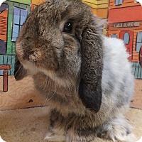 Adopt A Pet :: Peter - Foster, RI