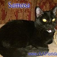 Adopt A Pet :: Samosa - Pensacola, FL