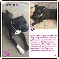 Adopt A Pet :: Molly - Livermore, CA