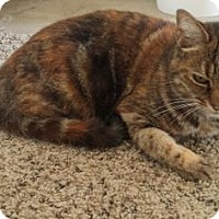 Adopt A Pet :: Cami - Visalia, CA