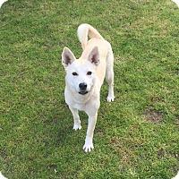 Adopt A Pet :: KONA - Sherman Oaks, CA