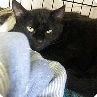 Adopt A Pet :: Nobe - Paradise, CA