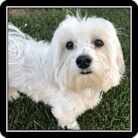 Adopt A Pet :: Hunter - San Diego, CA