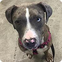 Adopt A Pet :: Luke - Long Beach, CA