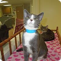 Adopt A Pet :: Trout - Medina, OH