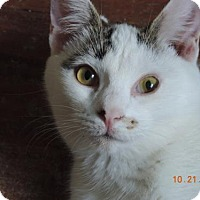 Adopt A Pet :: Austin - Philadelphia, PA