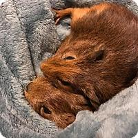 Adopt A Pet :: Clovis - Fort Worth, TX