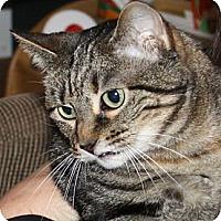 Adopt A Pet :: Aura - Coppell, TX