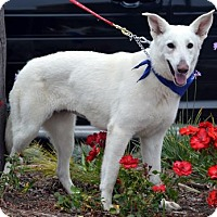 Adopt A Pet :: Mia - Mira Loma, CA